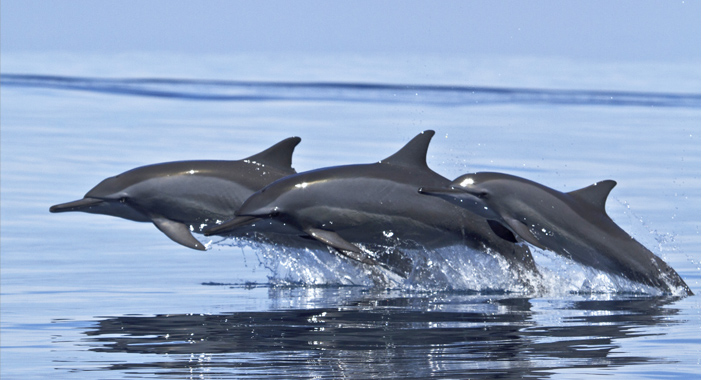 Whale and Dolphin watching